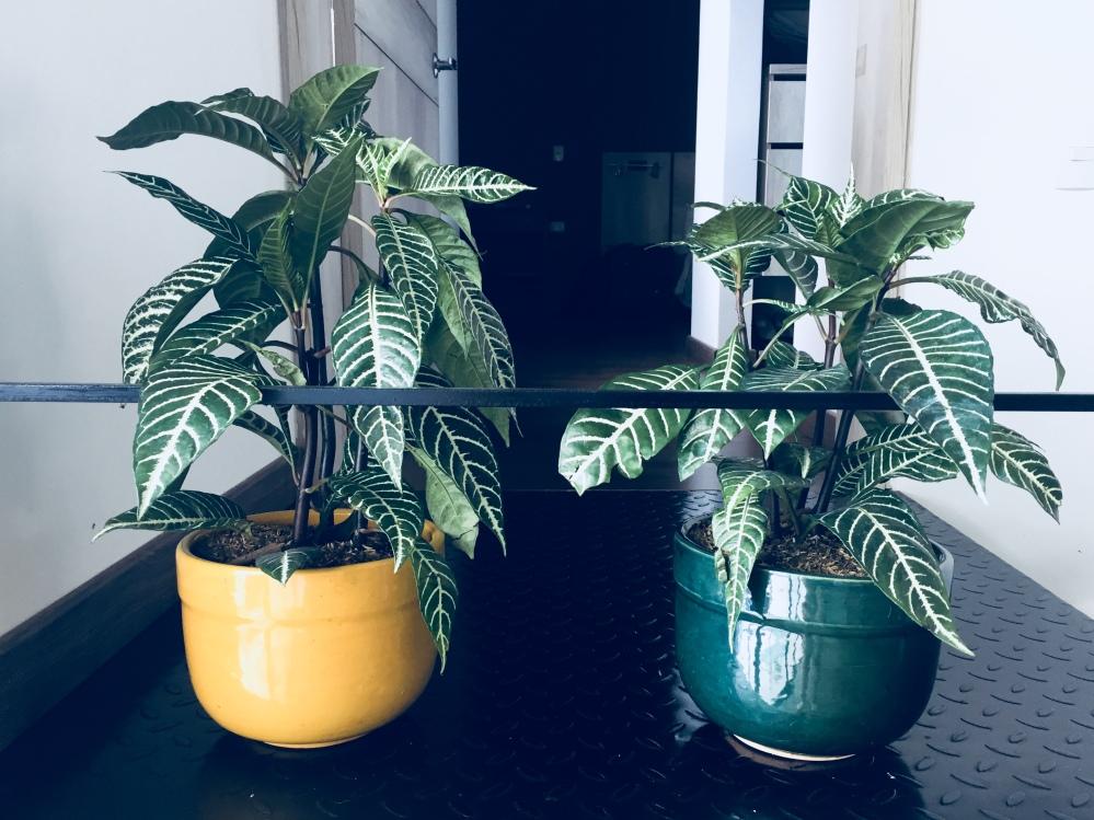 deco_plantas_casa